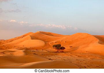 Lonely Tree Between Sand Dunes