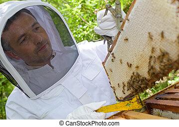 apicultor, con, Un, sellado, marco,