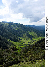 Cocora valley and palm forests, Colombia