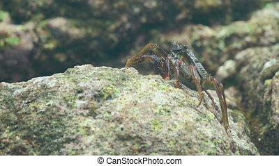 Crabs on the rock at the beach, close-up