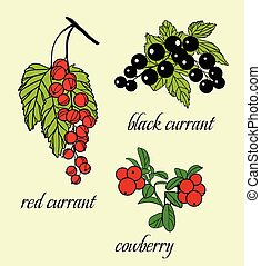Vector Set of doodle berries: black currant, red currants,...