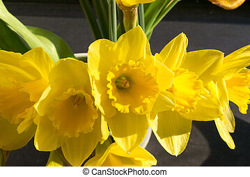 April blooming Narcissi flowers arranged in vase for...