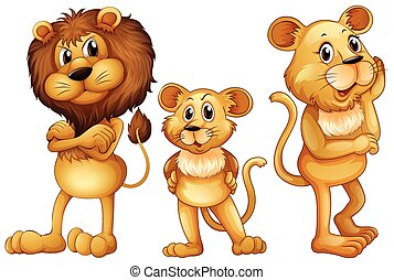Lion family standing together