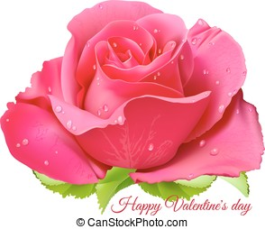 Pink rose. Happy Valentine day. Fully editable handmade...