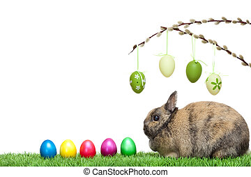 Easter bunny sitting in meadow with colorful Easter eggs and pussy willow.  Isolated on white Background.