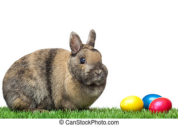 Easter bunny sitting in green meadow with colorful Easter eggs