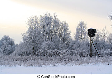 Winter forest covered with snow andh stork nest