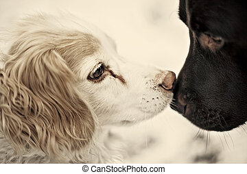 dogs kissing - Snow in Cottingham East Yorkshire February