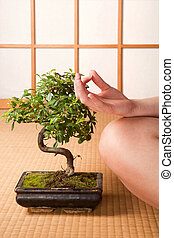 Meditation and bonsai - Meditating woman sitting next to a...