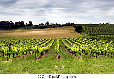Aquitaine France - Aquitaine vineyard in France in...
