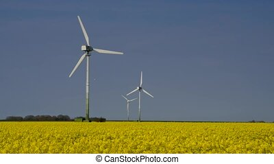 Wind turbine rape field