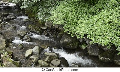 Brook and green trees - Brook flowing among stones along...