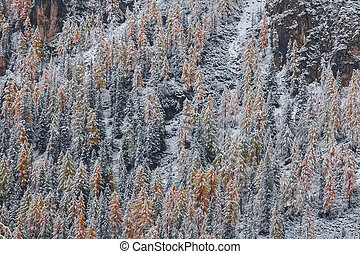 Snowy trees under first snow in Italian Dolomites - Snowy...
