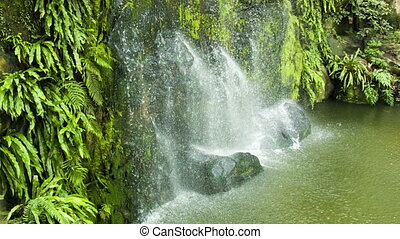 Waterfall with green leafs loop - Waterfall with green leafs...