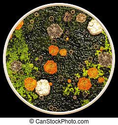 microscopio, lichene, funghi, sotto