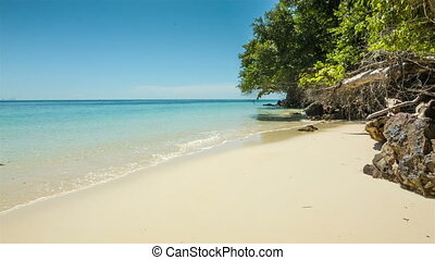 Wild beach with trees and rocks - Wild sand beach with trees...