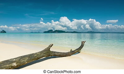 Lonely beach with old tree on sand - Beach with old tree on...