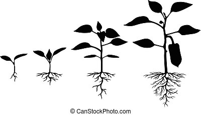 Set of silhouettes of peppers plants - Vector illustrations...