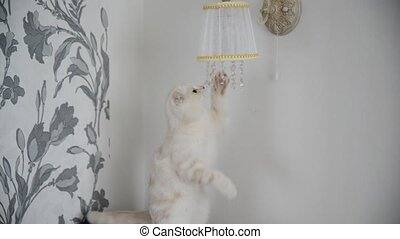 kitten plays with crystal pendants lamps