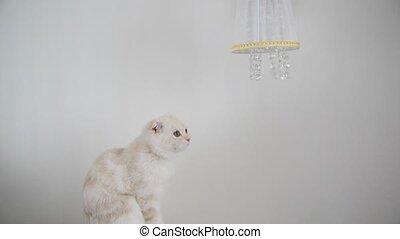 kitten looks at crystal pendants lamps