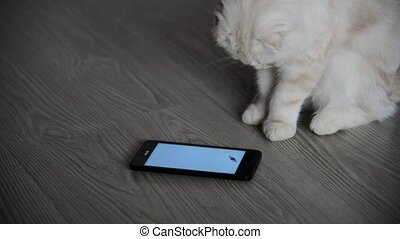 Kitten 4 month playing with cell phone - Kitten 4 month...