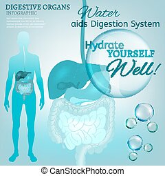 Digestive System - Water is the driving force of all nature....