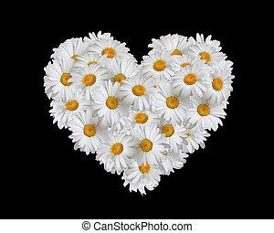 amor, corazón, margaritas