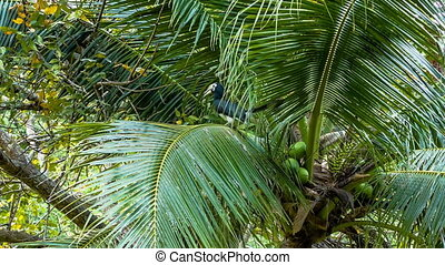 Tropical bird on palm tree - Tropical bird flying away from...