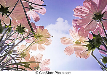 Double exposure of flower field in sunny day