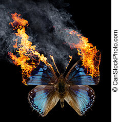 burning butterfly - a blue burning butterfly with spread...