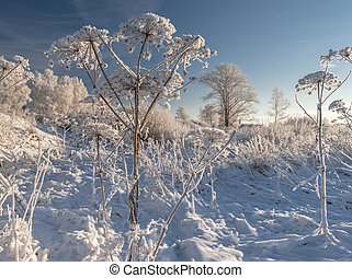 Hoarfrost - Snow covered and hoar frosted grass and trees in...