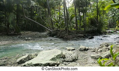 River in the rainforest in Cebu Philippines - The river...