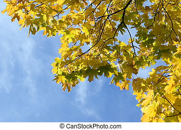Autumn leaves for design - There are autumn leaves for nice...