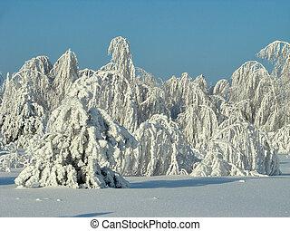 Beautiful winter forest - a photo 4 - Beautiful winter...