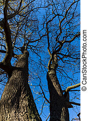 Late fall trees and blue sky - Vibrant colored treetop in...