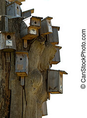 Nesting box - There are many little homes for birds