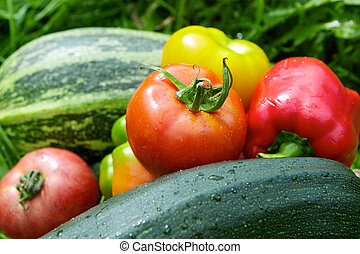 Vegetables on the green grass background