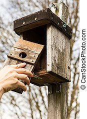 man is opening a birdhouse, to look in it