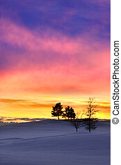 Sun set - Silhouette of pine wood trees against colorful sky...