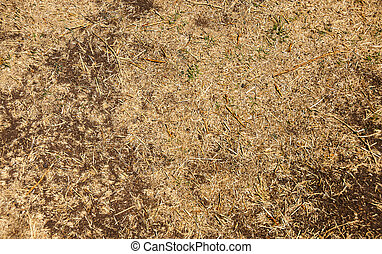 Natural background - dry grass land in Mexico