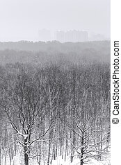snowfall over city park forest in winter
