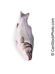 Fresh seabass Isolated on a white background