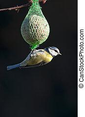 Blue Tit - blue tit feeding on a bird feeder