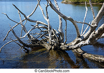 dead gnarly tree in water - A dead gnarly tree is half...
