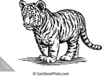 engrave ink draw tiger illustration - black and white...