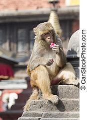 Stupa in Swayambhunath Monkey temple in Kathmandu, Nepal