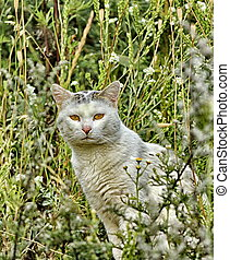 Seated grey and white cat