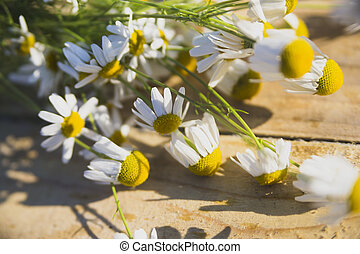 flowers - Useful properties of chamomile are used for the...