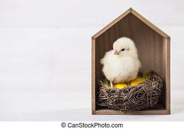 poulet,  concept, Paques, jeune, maison
