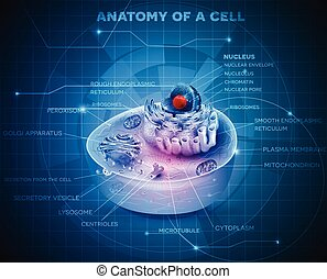 Cell structure - Cell anatomy cross section abstract blue...